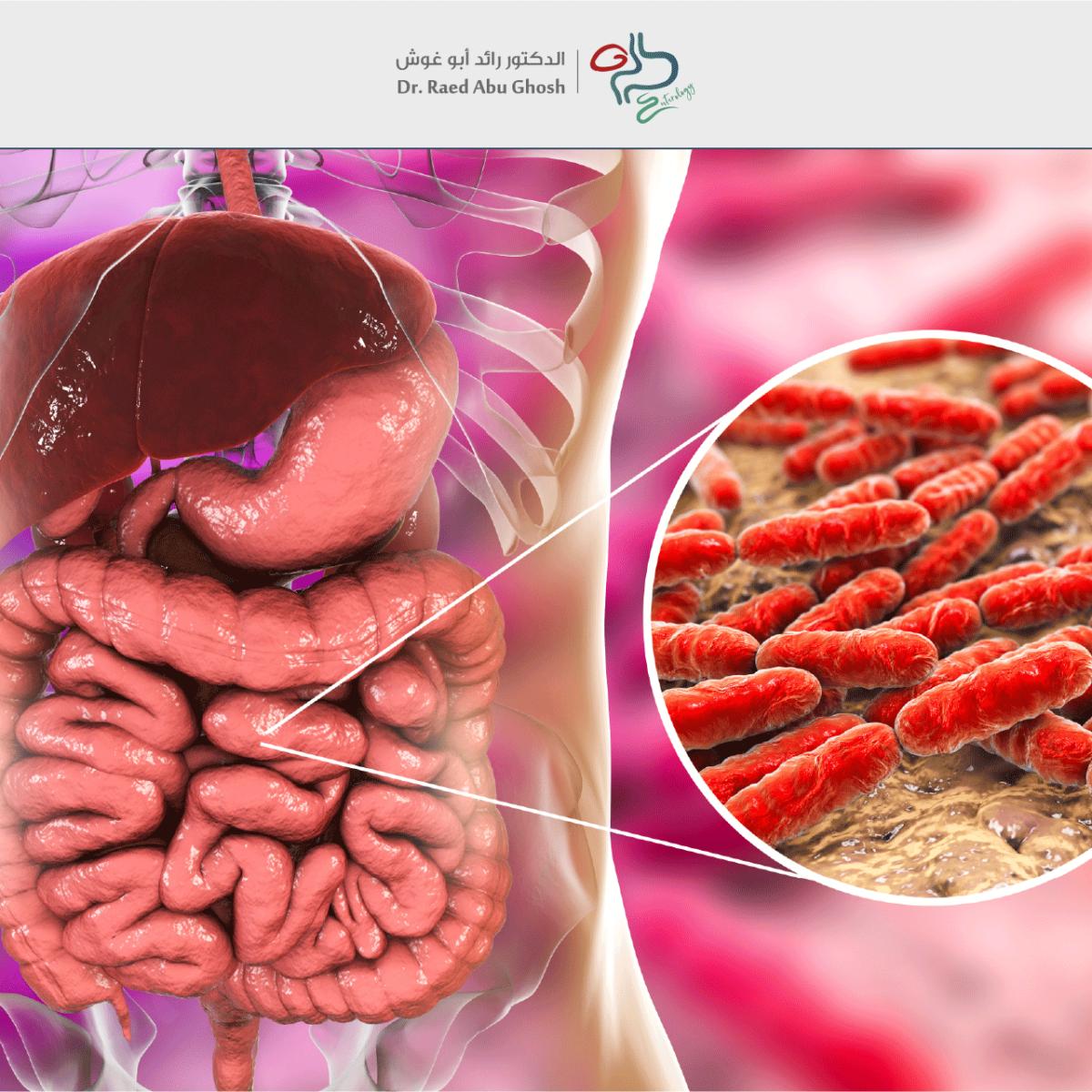 -رائد-بكتيريا-الأمعاء-النافعة-1200x1200.png
